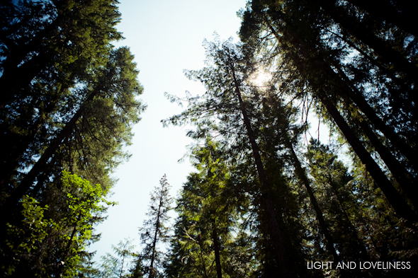 forest-0001